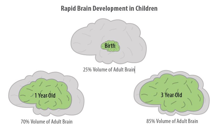 Brains are built from the bottom up. The basic sensory skills develop  first, followed by language connections. Both of these areas reach peak  development ...