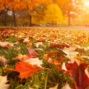 With fall comes transitions...and CYI's time to report their success stories!